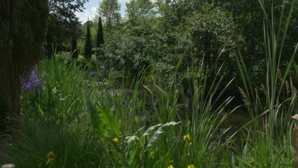Cypresses, Trees, Dandelion, Blue Flowers Nearby