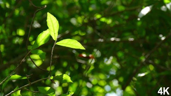 Thumbnail for Foliage Nature