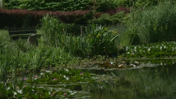 Thumbnail for Rippling Pond's Water, Lilies' Islands, Bushes