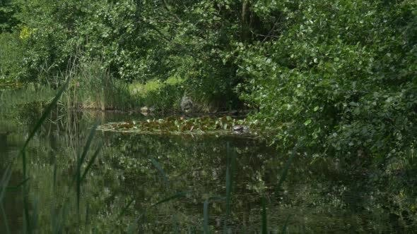 Swampy Pond, Trees' Branches Upon the