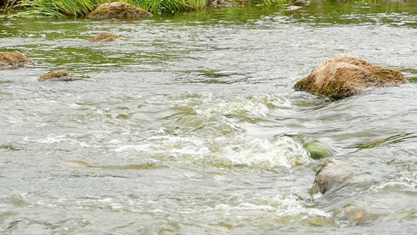 Thumbnail for Fast Flowing River With Stones In The Water Slow