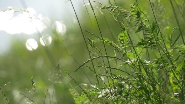 Flesh Lush Green Grass on the River Bank