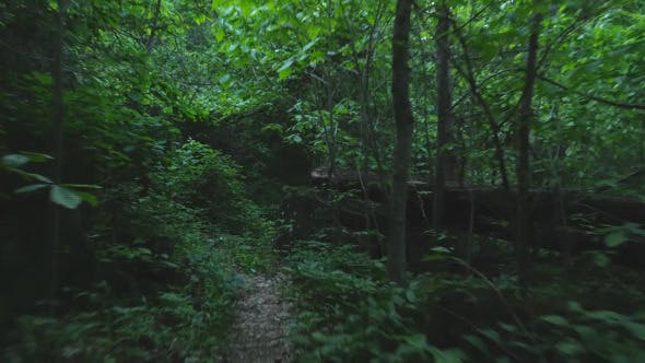 Thumbnail for Running on Hiking Trail