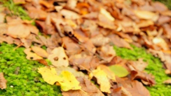 Herbst-Saison