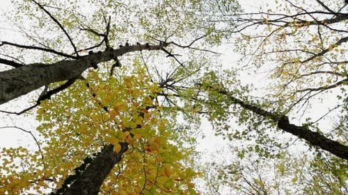 Tree-Tops
