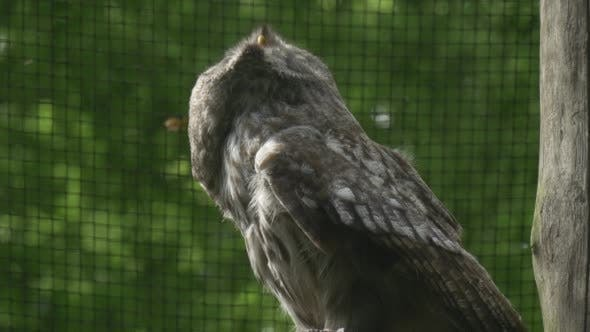 Great Grey Owl, Bird, Cage Grate, Fly Away