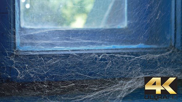 Thumbnail for Spider Web on Old Window
