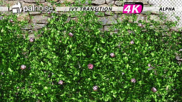 Thumbnail for Pink Flower & Ivy Growing