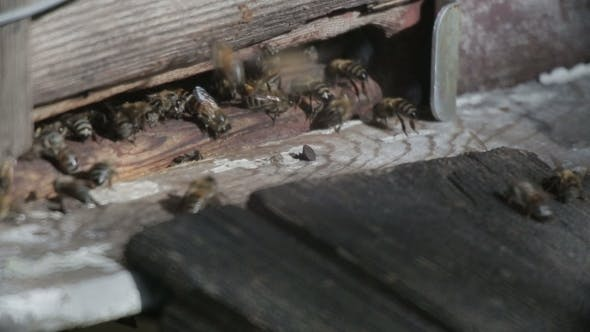 Bee Flying In Front Of a Beehive