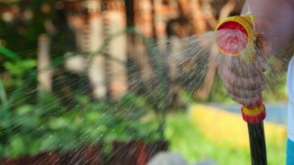 Thumbnail for Manual Garden Sprayer