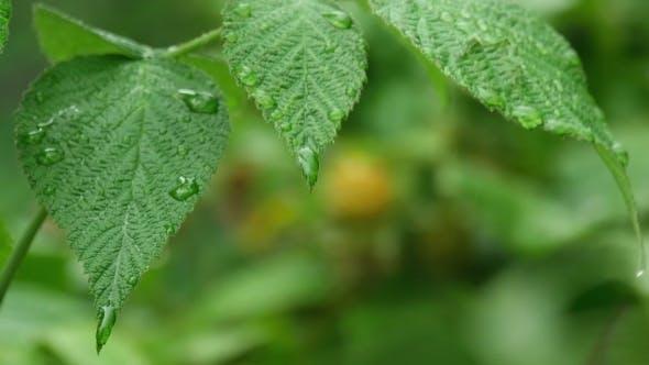 Thumbnail for Summer Rain