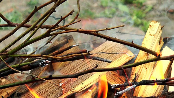 Burning Dry Tree Branches