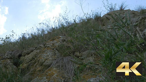 Cover Image for Vegetation on Mountain Rocks
