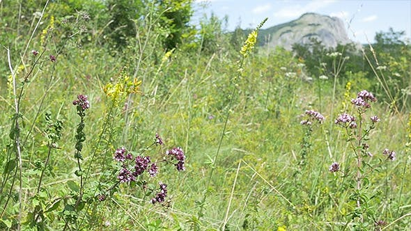 Wild Flowers and Meadow