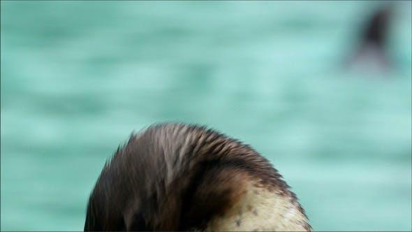 Head of the Penguin