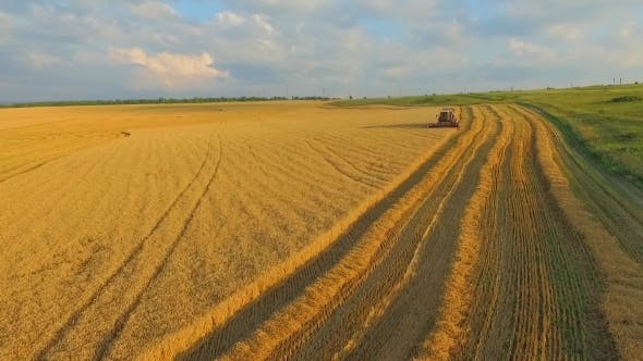 Thumbnail for View From The Top For Cleaning Wheat Field