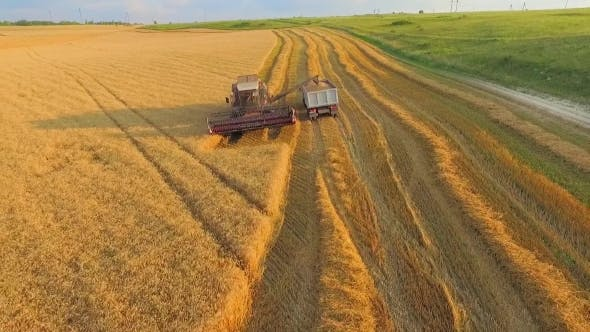 Thumbnail for Combine On Harvest Field Loading