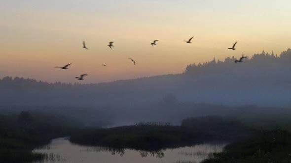 Cover Image for Birds Fly at Night in the Fog Over the Field