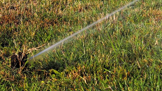 Thumbnail for Sprinklers on Grass