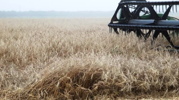 Thumbnail for Wheat Harvesting Combain