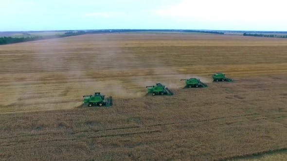 Thumbnail for Wheat Harvesting