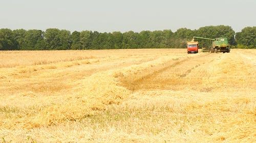 Modern Combine Harvesting Grain
