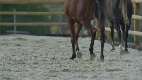 Zwei Pferde laufen