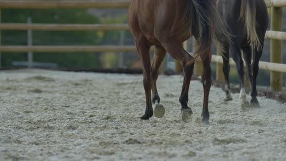 Cover Image for Two horses running