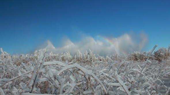 Thumbnail for Winter Ice Blocks