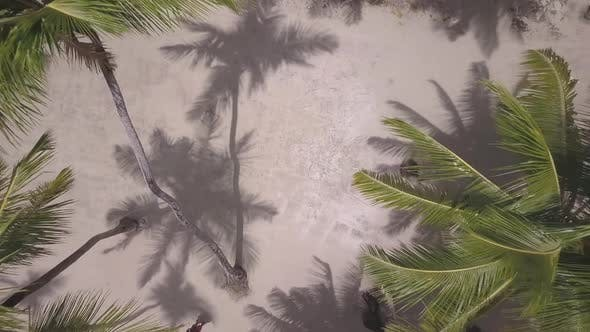 Thumbnail for Drone Palms Caribbean