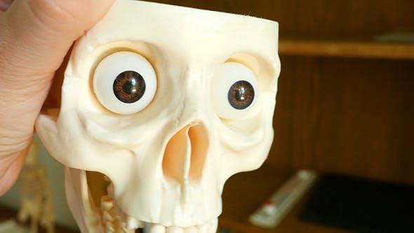 Thumbnail for Hand Holding A Skull