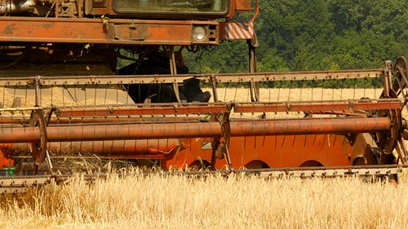 Thumbnail for Old Grain Harvester Working In Field