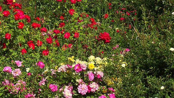 Thumbnail for Colorful Flowerbed