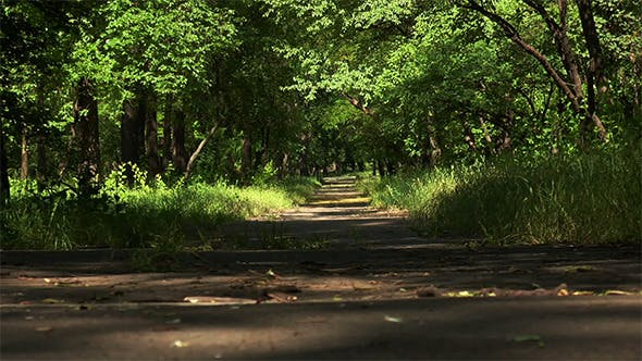 Thumbnail for Empty Road Running Through Tree Alley