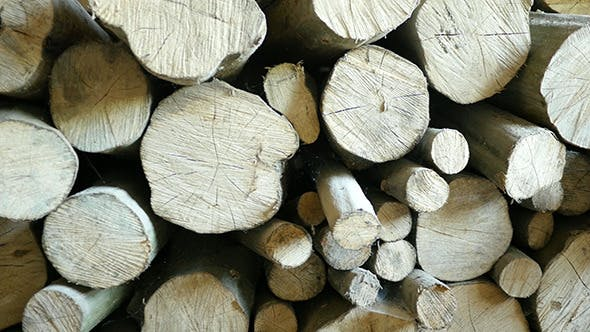 Thumbnail for Wood Texture Background