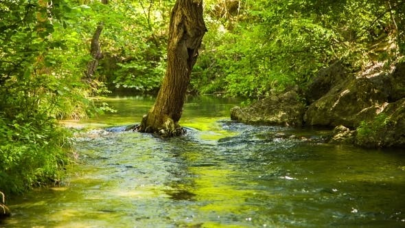 Thumbnail for Calm River Peacefully Flowing In Green Forest