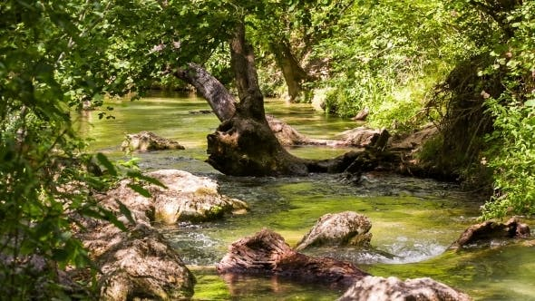 Thumbnail for Tranquil River Flowing In Sunny Green Forest