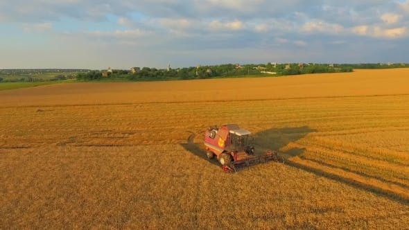 Thumbnail for Combine On Harvest Field In Ukraine