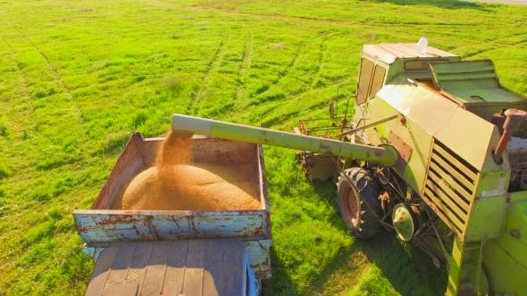Thumbnail for Combine Harvester In Action On Wheat
