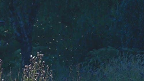 Mücken schwarm über den Disteln