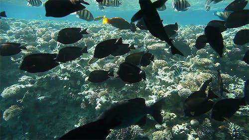 Underwater Footage of Sea Life