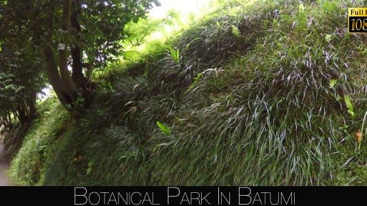 Thumbnail for Botanical Park In Batumi 2