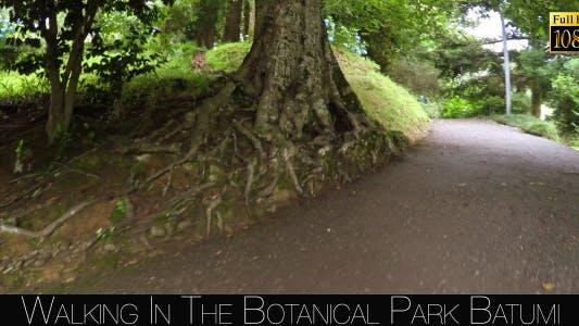 Thumbnail for Botanical Park In Batumi 3
