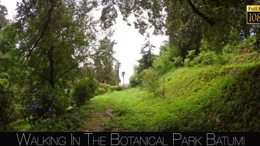 Thumbnail for Botanical Park In Batumi 4