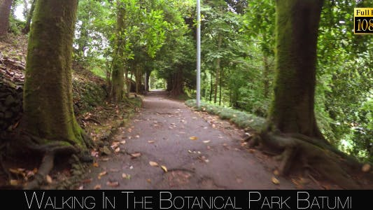 Thumbnail for Botanical Park In Batumi 5