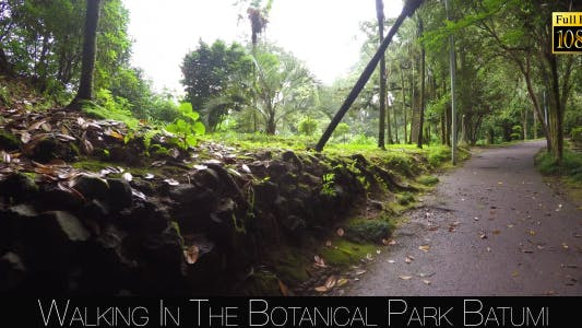 Cover Image for Botanical Park In Batumi 6