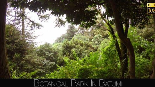 Thumbnail for Botanical Park In Batumi 7