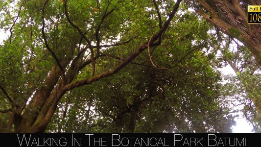 Thumbnail for Botanical Park In Batumi 8