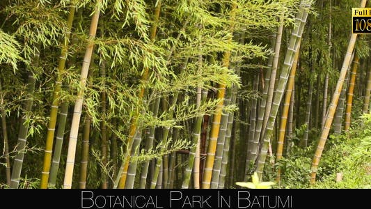 Cover Image for Botanical Park In Batumi 9