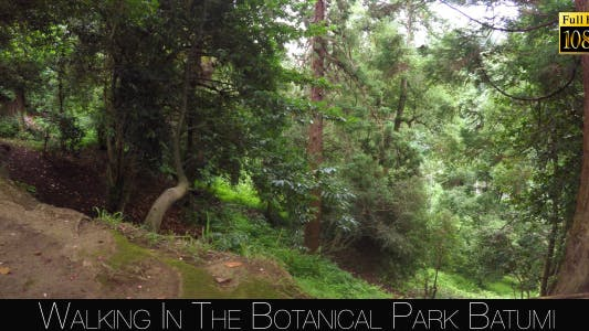Thumbnail for Botanical Park In Batumi 10
